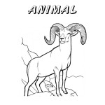 Nevada Day Coloring Book: State Animal, Big Horn Sheep, 2012 Copyright Christine Hull, Windy Pinwheel